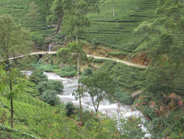 Tea Plantations in central Sri Lanka