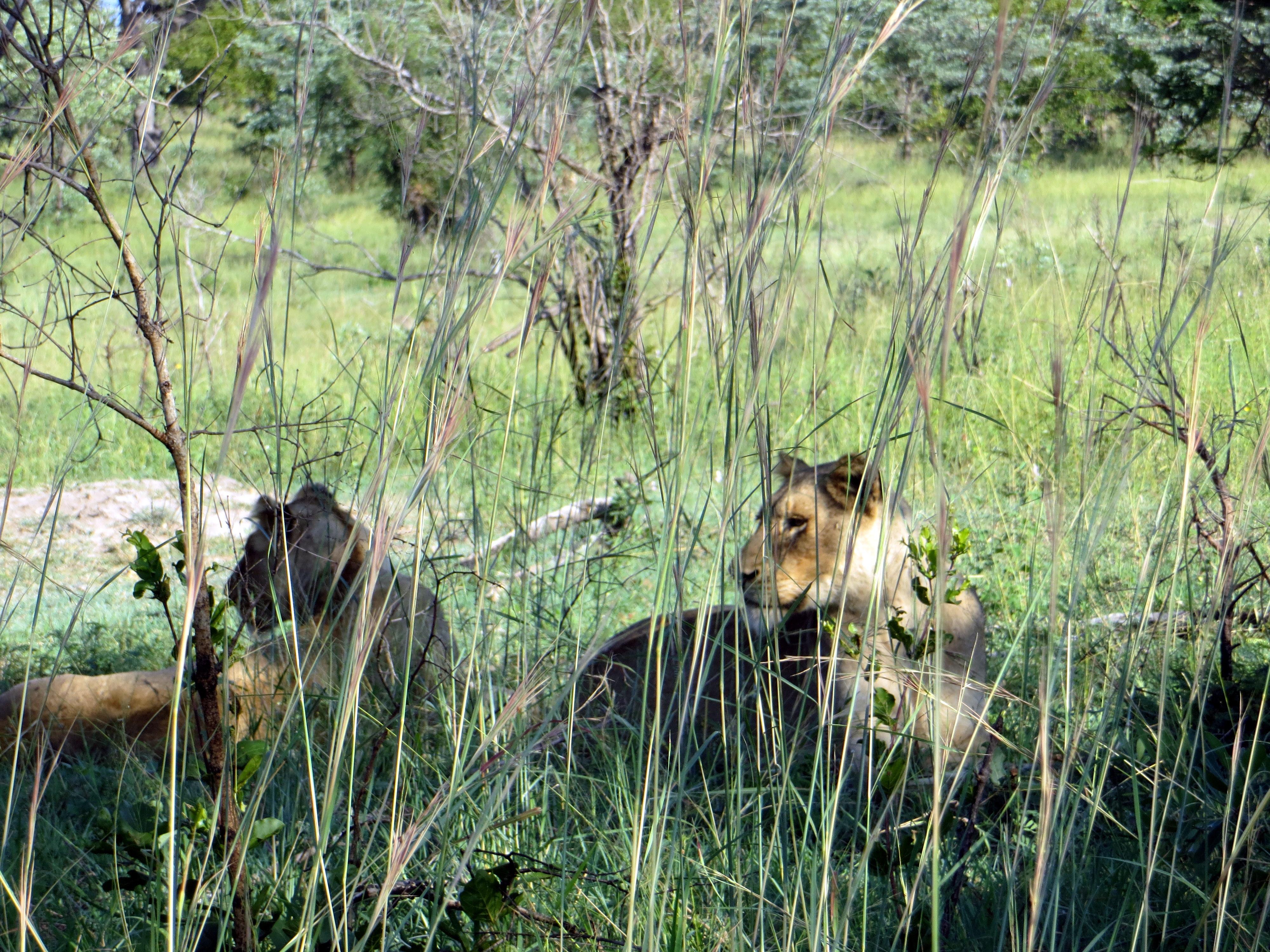 Kruger nasjonalpark, Sør-Afrika - Lonely Planet